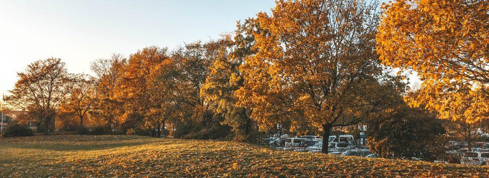 Autumn in Sweden - Trees/الخريف
