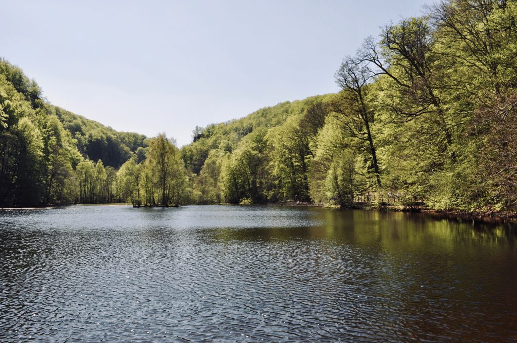 Outdoor photo of a lake surrounded by green trees