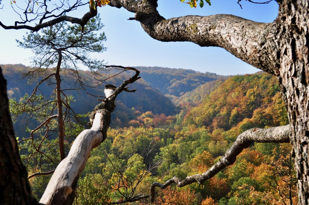 National park in autumn, with many trees in colours